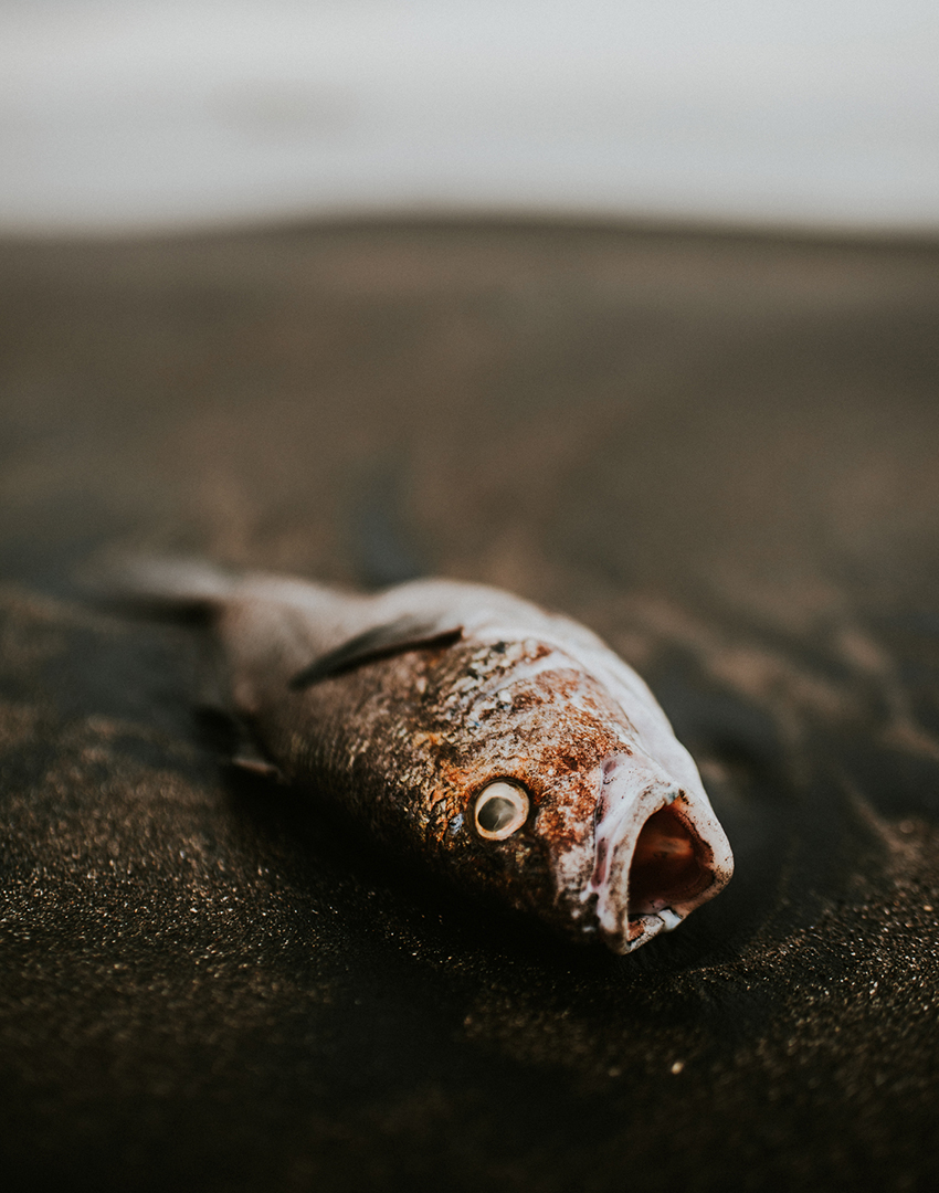 Read more about the article How is pogie fishing currently regulated off Louisiana waters?