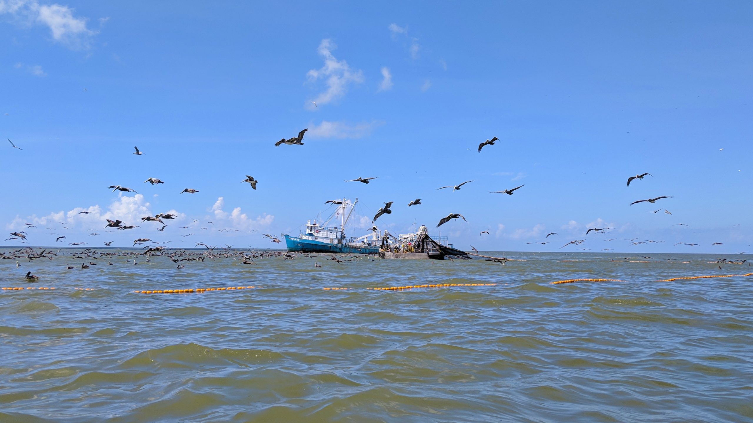 Read more about the article Foreign-Owned Fishery Violated East Coast Catch Limits, Similar Threat in Louisiana