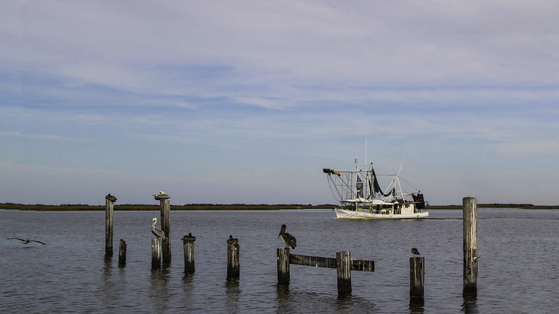 Coastal Communities Overwhelmingly Support Regulation of Industrial Pogie Fishing in the Louisiana Surf Zone