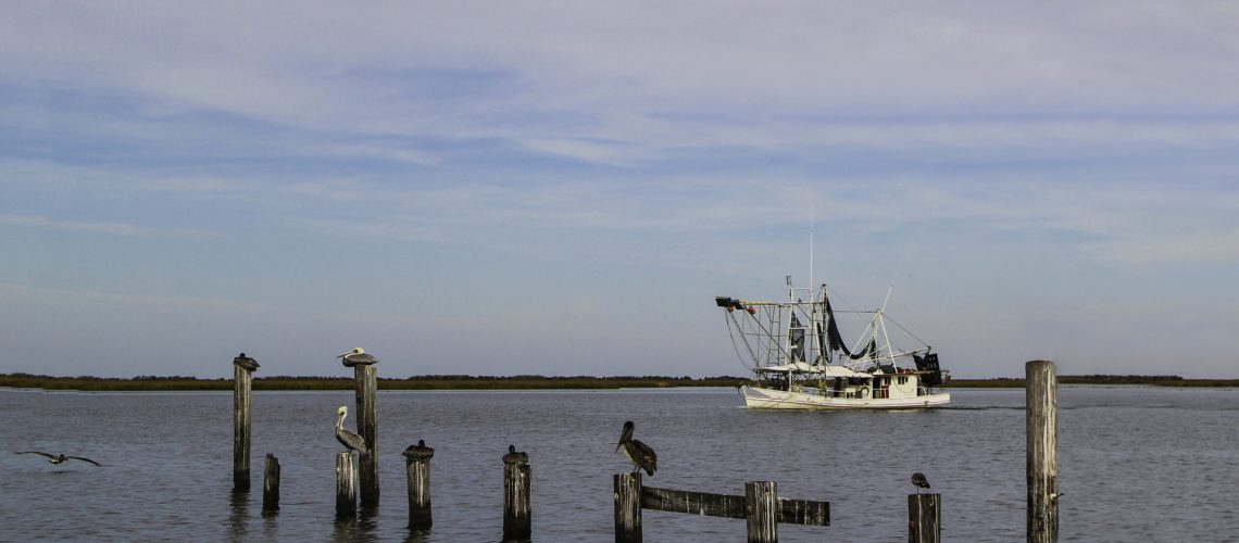 Shrimp boat in background with brown pelicans perched on pilings in foreground in the Mississippi River Gulf Outlet at Shell Beach, in St. Bernard Parish, Louisiana