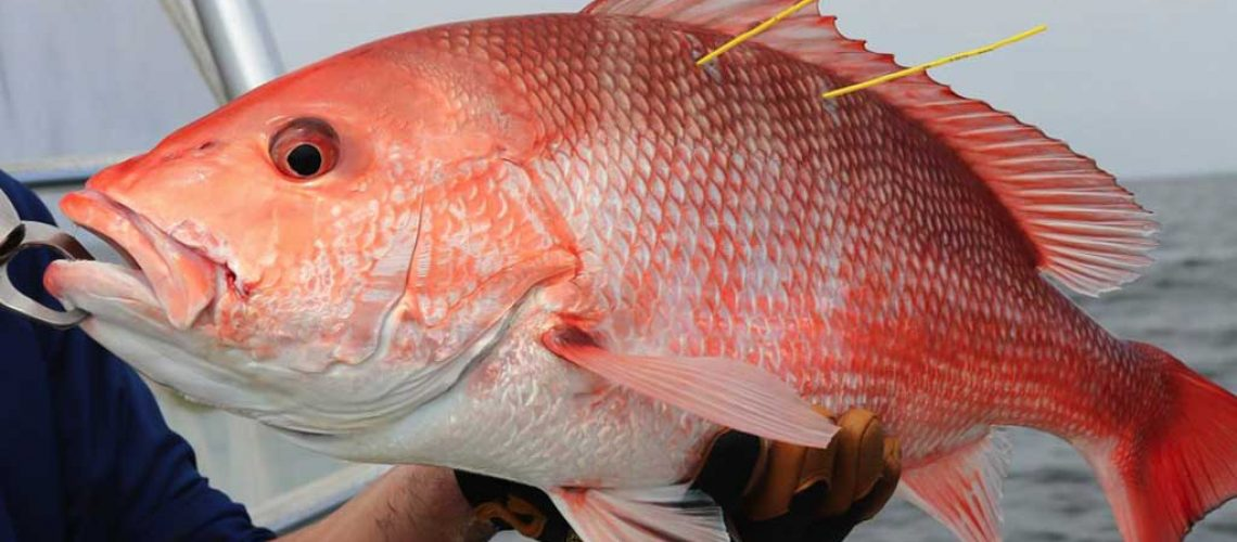 red-snapper-post